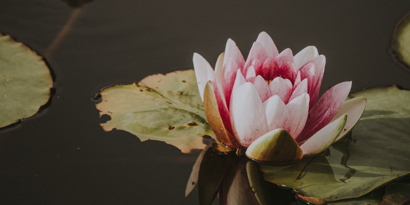 Mud And Lotuses: The Buddhist Meaning Of Dukkha