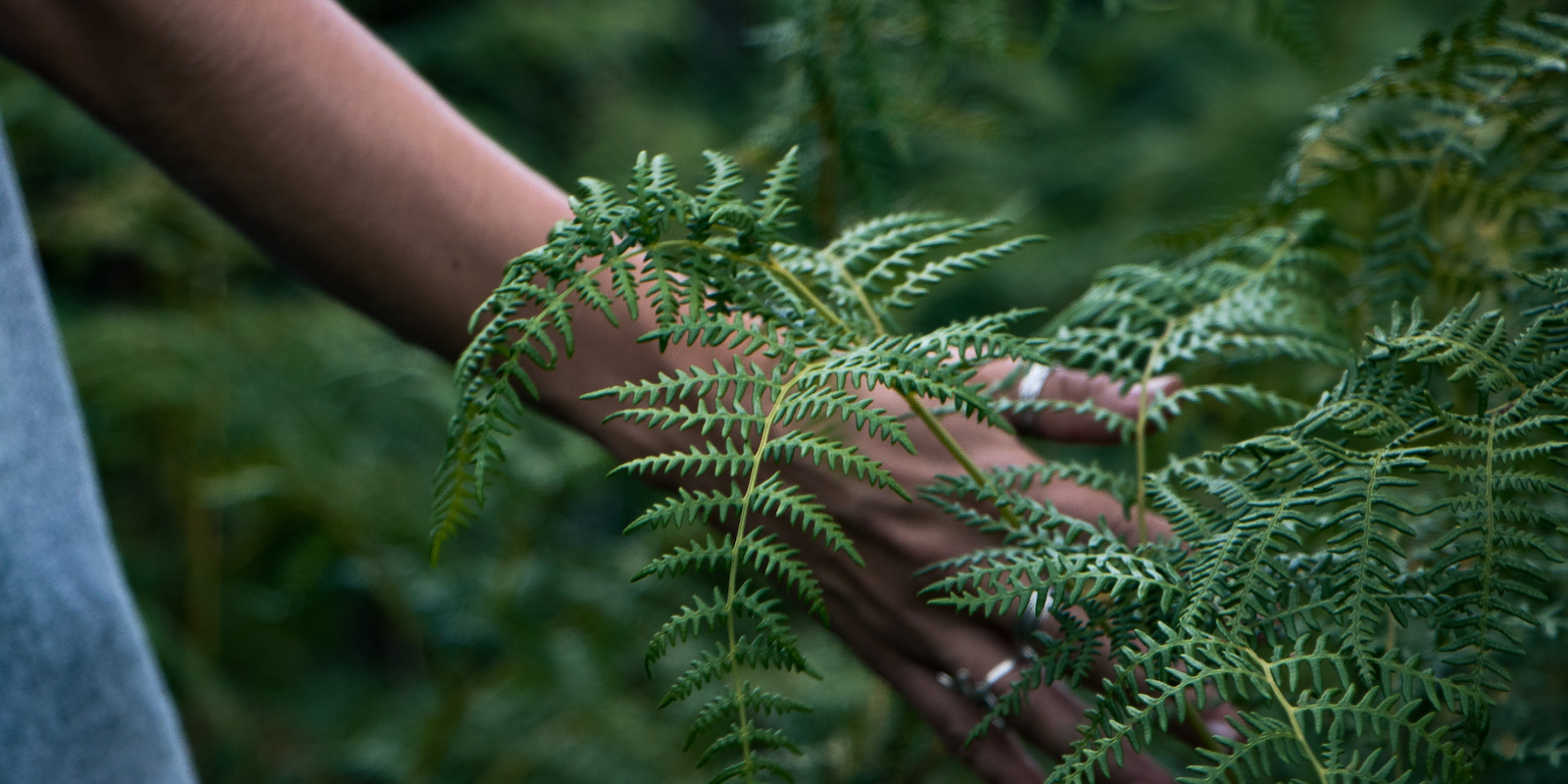 How Living an Ayurvedic Lifestyle and Caring for the Planet Go Hand in Hand